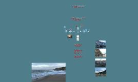 Copy of Estabilização de Arribas na Orla Costeira