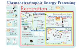 Copy of AP Bio- Energy 5: Chemoheterotrophic Nutrition