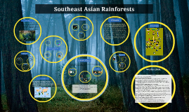 Southeast Asian Rainforests