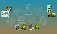 Rainforest Webquest