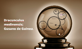 Copy of Dracunculus medinensis; Gusano de Guinea.