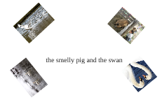 the smelly pig and the swan
