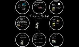 Phantom Orchid