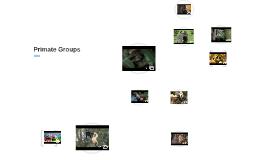 Primate Groups