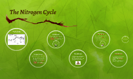 Copy of Nitrogen Cycle