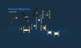 Waved Alabatross