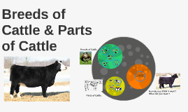 Breeds of Cattle & Parts of Cattle