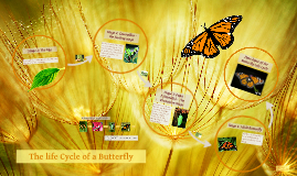 Copy of Copy of Life Cycle of a Butterfly
