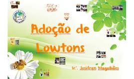Adoção de Lowtons