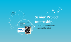 Senior Project Internship