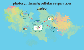 Copy of photosynthesis & cellular respiration project