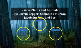 Native Plants and Animals