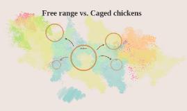 free range vs caged chickens