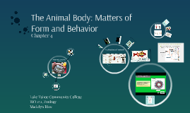 Abridged Animal Body: Matters of Form and Behavior