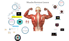 Muscles Revision Lesson