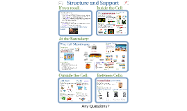 Copy of AP Bio- Matter 3:  Structure & Support