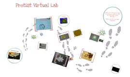 Copy of Virtual Protist Lab
