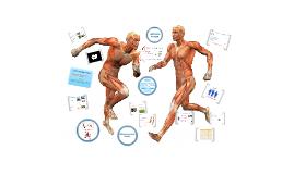 Copy of Copy of GCSE PE Muscular System