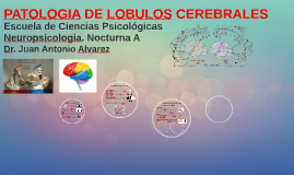 Copy of PATOLOGIA DE LOBULOS CEREBRALES