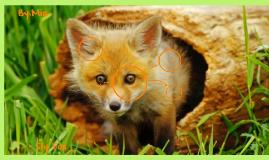 Sly Fox :3
