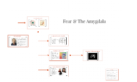 Fear & The Amygdala