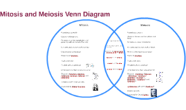 Venn diagram mitosis and meiosis vatozozdevelopment venn ccuart Choice Image
