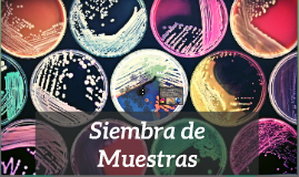 Copy of Siembra de Muestras