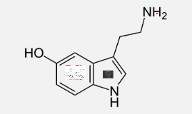Selective-Serotonin Reuptake Inhibitors