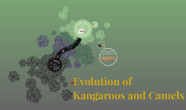 Evolution of Kangaroos and Camels