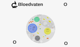 Copy of Bloedvaten