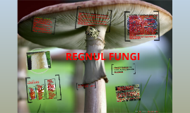 Copy of REGNUL FUNGI (CIUPERCI)