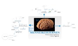 Naturfag - Om Hjernen