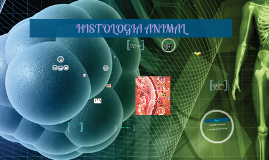 Copy of HISTOLOGIA ANIMAL