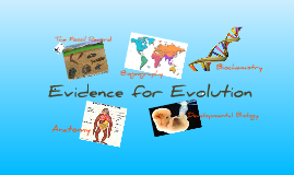 Copy of Evidence for Evolution