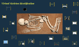 Virtual Skeleton Identification