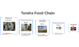 Food Chain In Tundra Region Csno Coin Quest Builder