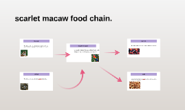 Macaw Food Chain