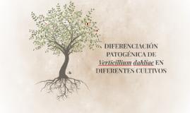 DIFERENCIACIÓN PATOGÉNICA DE Verticillium dahliae EN DIFEREN