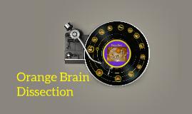Orange Brain Dissection