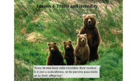 Lesson 4  Traits and Heredity