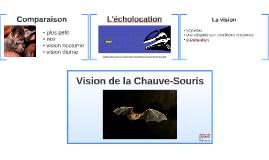 Vision de la Chauve-Souris