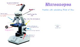 Microscopes and Cell Theory