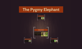 The Pigmy Elephant