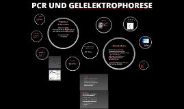 PCR UND GELELEKTROPHORESE