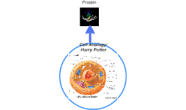 Cell Analogy: Harry Potter