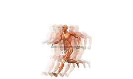 Copy of Aparato Locomotor del Cuerpo Humano