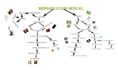 REPRODUCCION SEXUAL.