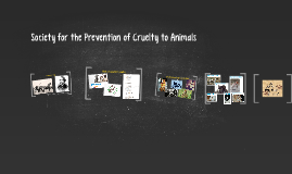 Society for the Prevention of Cruelty to Animals