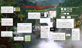 Copy of The Positive Impacts of Humans on the Rainforest