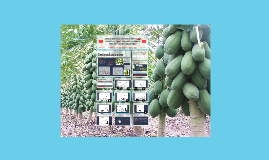 CURVAS DE ABSORCIÓN DE NUTRIENTES EN PAPAYA (Carica papaya L